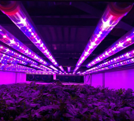 Ledgrowlight, indoorfarmset